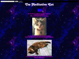 The Meditative Cat