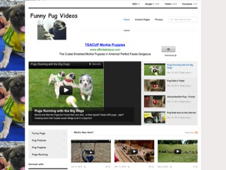 Funny Pug Videos