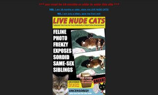 Live Nude Cats