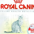 Royal Canin Cat Food Review
